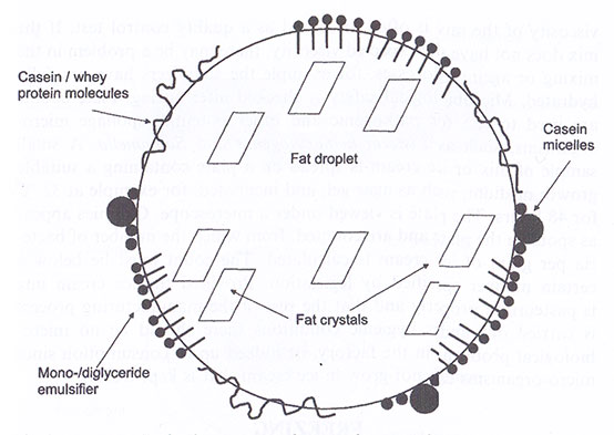 Fat droplet during ice-cream-mixture ageing